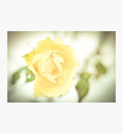 Winter Rose  Photographic Print