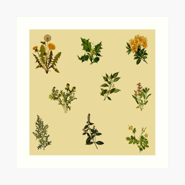 Vintage Botanical pack Art Print