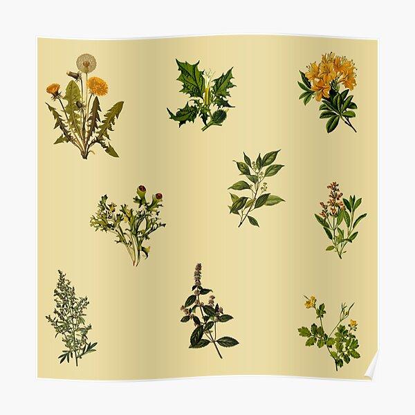 Vintage Botanical pack Poster