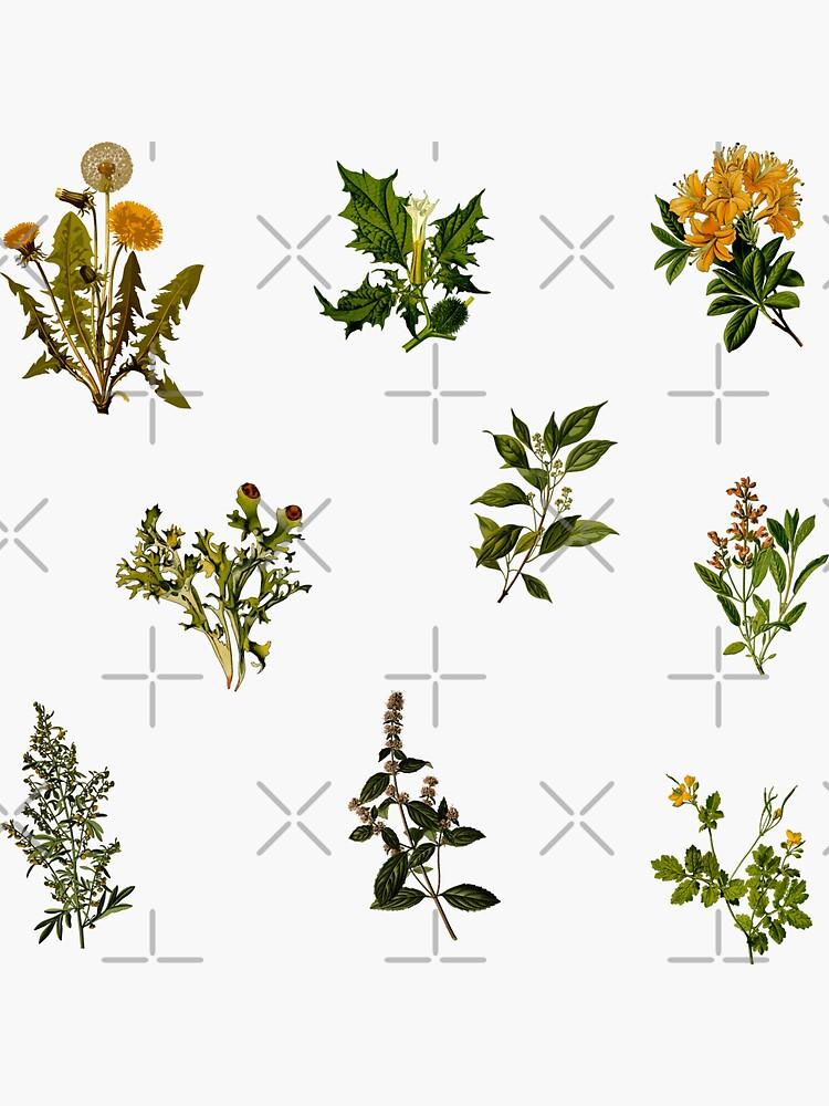Vintage botanische Packung von Ranp
