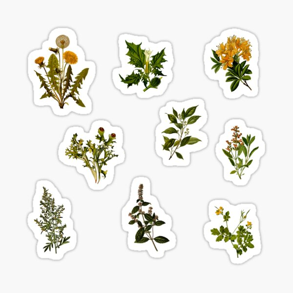Vintage Botanical pack Sticker