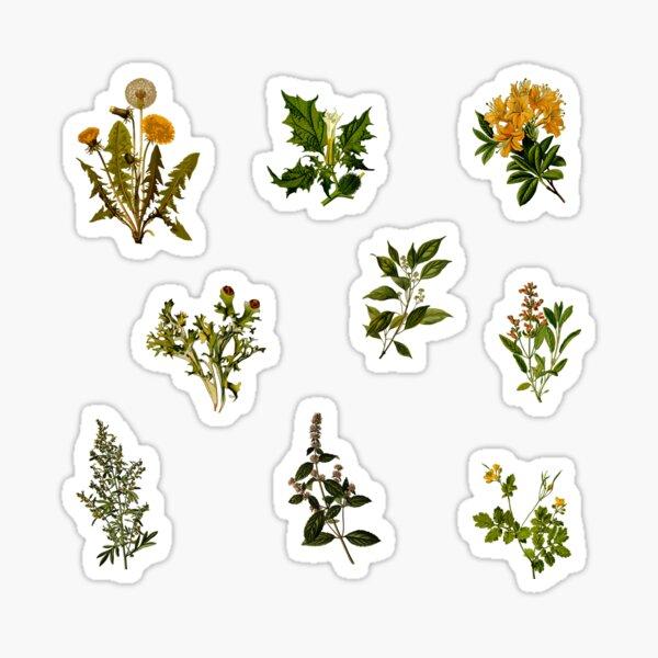 Pack botánico vintage Pegatina