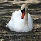 Swan in treacle by Peter Dickinson