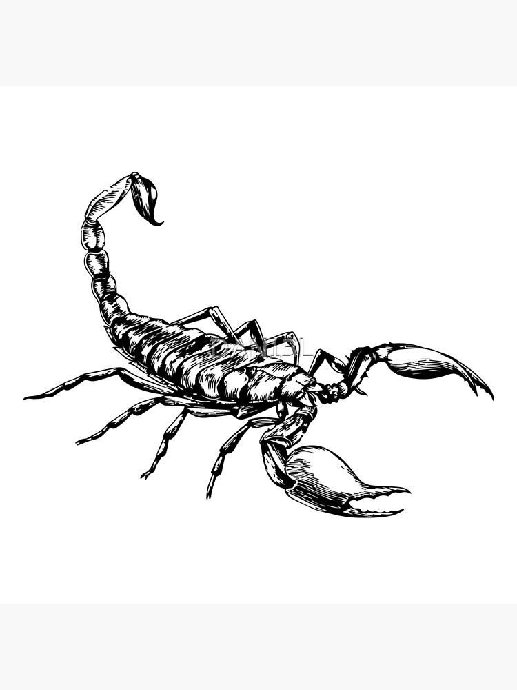 Impression Rigide Dessin De Scorpion Par Dan13l Redbubble