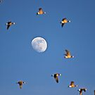 Flutterby the Moon by Kenneth Haley