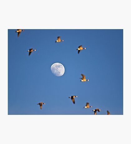 Flutterby the Moon Photographic Print