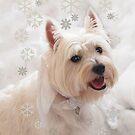Snowflake Angel by LovelyFocus