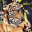 Tiger Cub by LovelyFocus