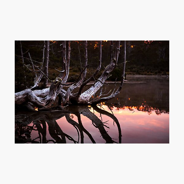 One tree many branches Photographic Print