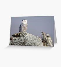 Snowy Owl Sentinel Greeting Card
