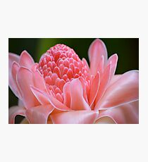 Tropical Gardens 7 - pink ginger torch lily Photographic Print