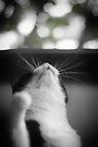What is it kitty? by Jocelyn  Parry-Jones