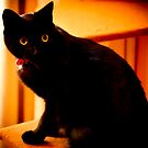 Black cat by Jocelyn  Parry-Jones