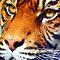 Animals - closeup by Christina Brunton