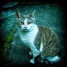 Retro kitty by Jocelyn  Parry-Jones