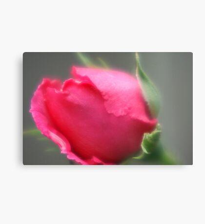Rosebud Canvas Print