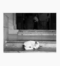Havana sleeping dog #1 Photographic Print