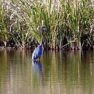 Heron At Delta Rivers by WildestArt
