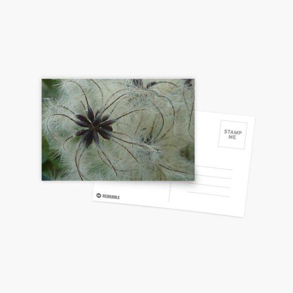 Wild Clematis  Postcard