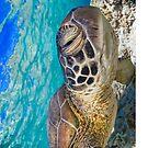 Winking turtle by Kara Murphy