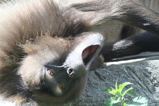 Lazy Monkey by indconversation