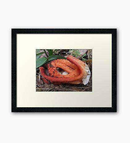 The Hatchling Framed Print