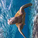 Turtle in the blue by Kara Murphy