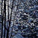 2012 - winterwald by Ursa Vogel