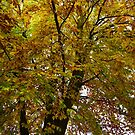 Autumn / Fall Tree Leaves by Richard Winskill