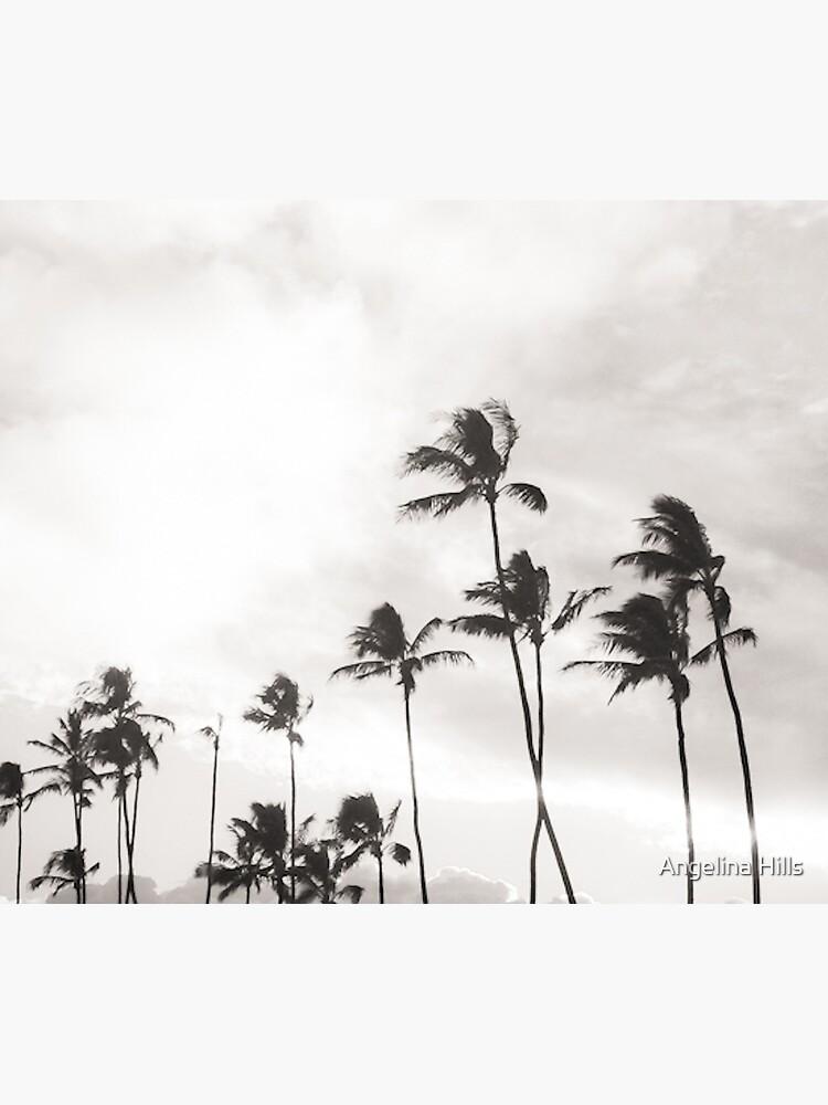 B&W Paia Palm trees by alohaportraits