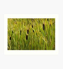 A Swamp Of Cattails Art Print