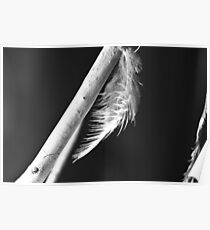 Feather & Wood Poster
