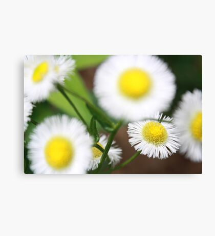 Cute White and Yellow Flowers Canvas Print