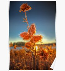 Spiked Sunset Poster