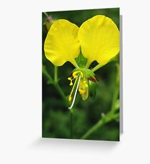 Commelina Africana Greeting Card