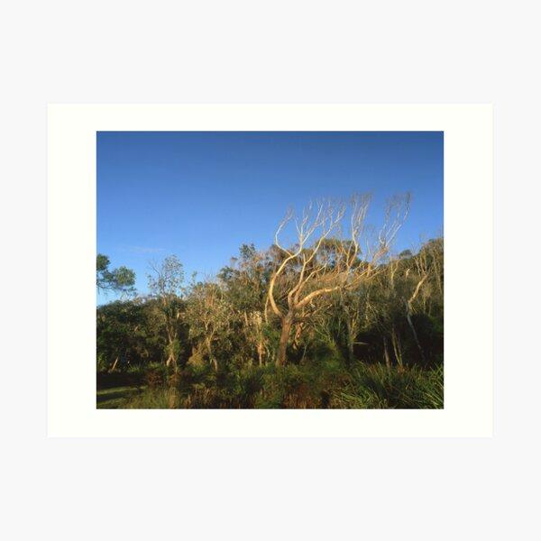 """That Tree"" ∞ Mimosa Rocks, NSW - Australia Art Print"