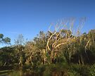 """That Tree"" ∞ Mimosa Rocks, NSW - Australia by Jason Asher"
