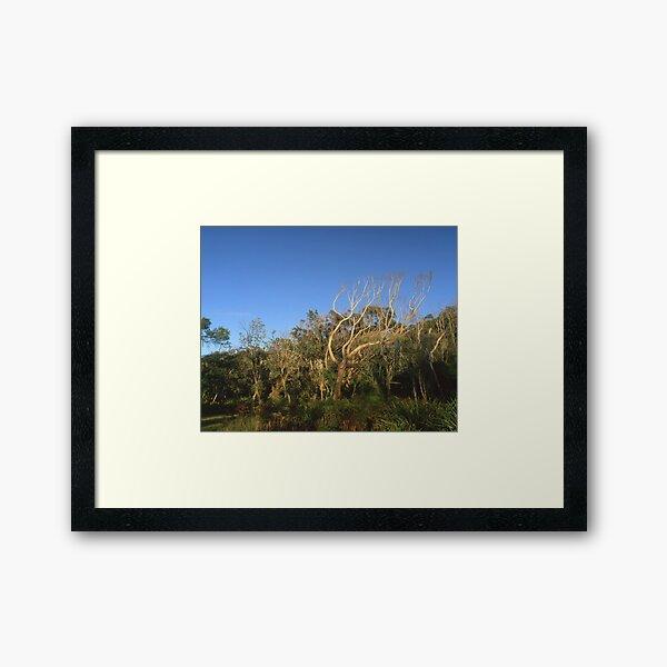 """That Tree"" ∞ Mimosa Rocks, NSW - Australia Framed Art Print"