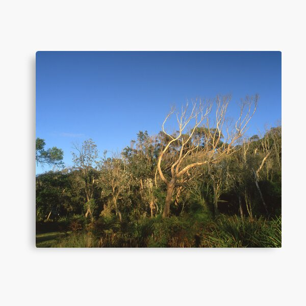 """That Tree"" ∞ Mimosa Rocks, NSW - Australia Canvas Print"