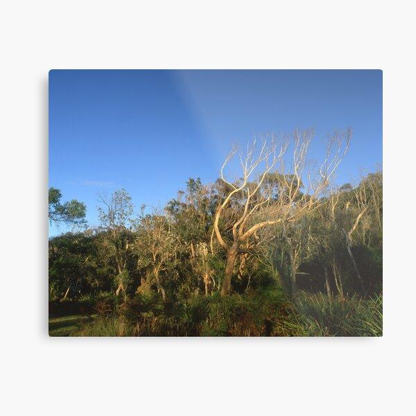 """That Tree"" ∞ Mimosa Rocks, NSW - Australia Metal Print"