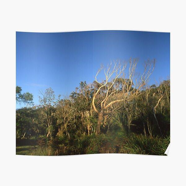 """""""That Tree"""" ∞ Mimosa Rocks, NSW - Australia Poster"""
