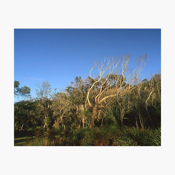 """That Tree"" ∞ Mimosa Rocks, NSW - Australia Photographic Print"