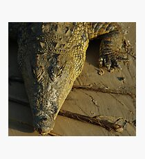a croc in sunset...... Photographic Print