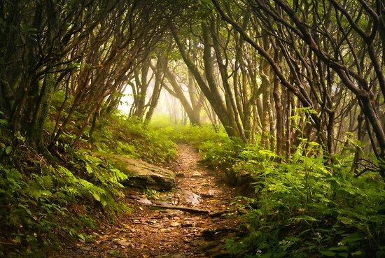 Appalachian Hiking Trail - Blue Ridge Mountains Forest Fog Nature Landscape by Dave Allen