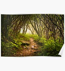Appalachian Hiking Trail - Blue Ridge Mountains Forest Fog Nature Landscape Poster
