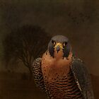Peregrine Falcon by swaby