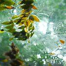 Watery Leaves in Summer by Steve Neville