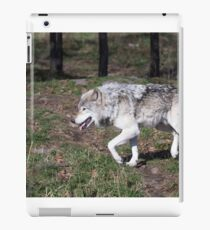 A lone timber wolf in the woods iPad Case/Skin