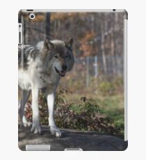Timber wolf in the woods iPad Case/Skin