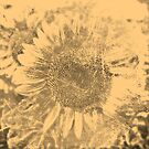 Vintage Sunflower artwork #2 by Nhan Ngo